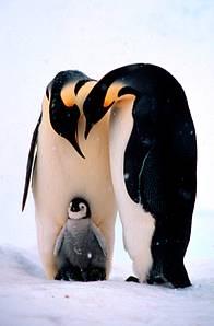 © Fritz Pölking / WWF